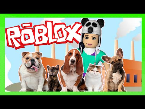Roblox – FÁBRICA DE PETS (Pet Tycoon)