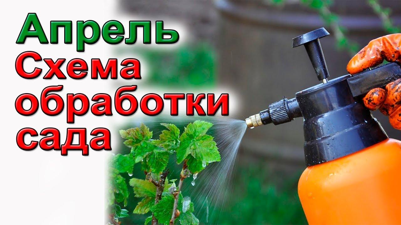 Чем опрыскать сад весной? Спасаем сад от болезней и вредителей.