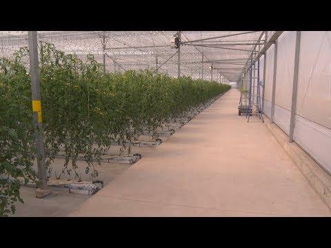 Quảng Ninh đưa công nghệ cao vào sản xuất nông nghiệp