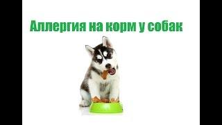 Аллергия На Корм У Собак& Лечение Аллергии На Корм У Собак. Ветклиника Био-Вет
