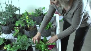 Indoor Hydroponic Vegetable Garden After Just 4 Weeks