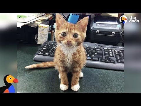 Feisty Foster Kitten Doesn't Grow Bigger - WIDDLE | The Dodo