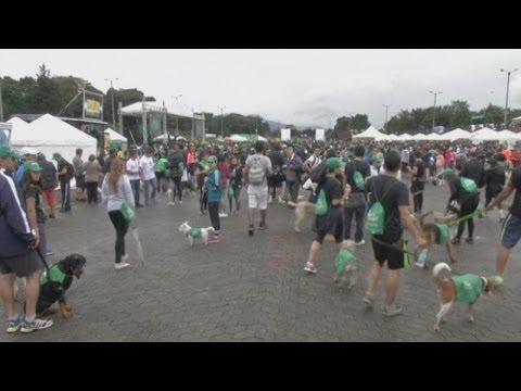Colombians let the dogs out during Bogota's first Pet Run