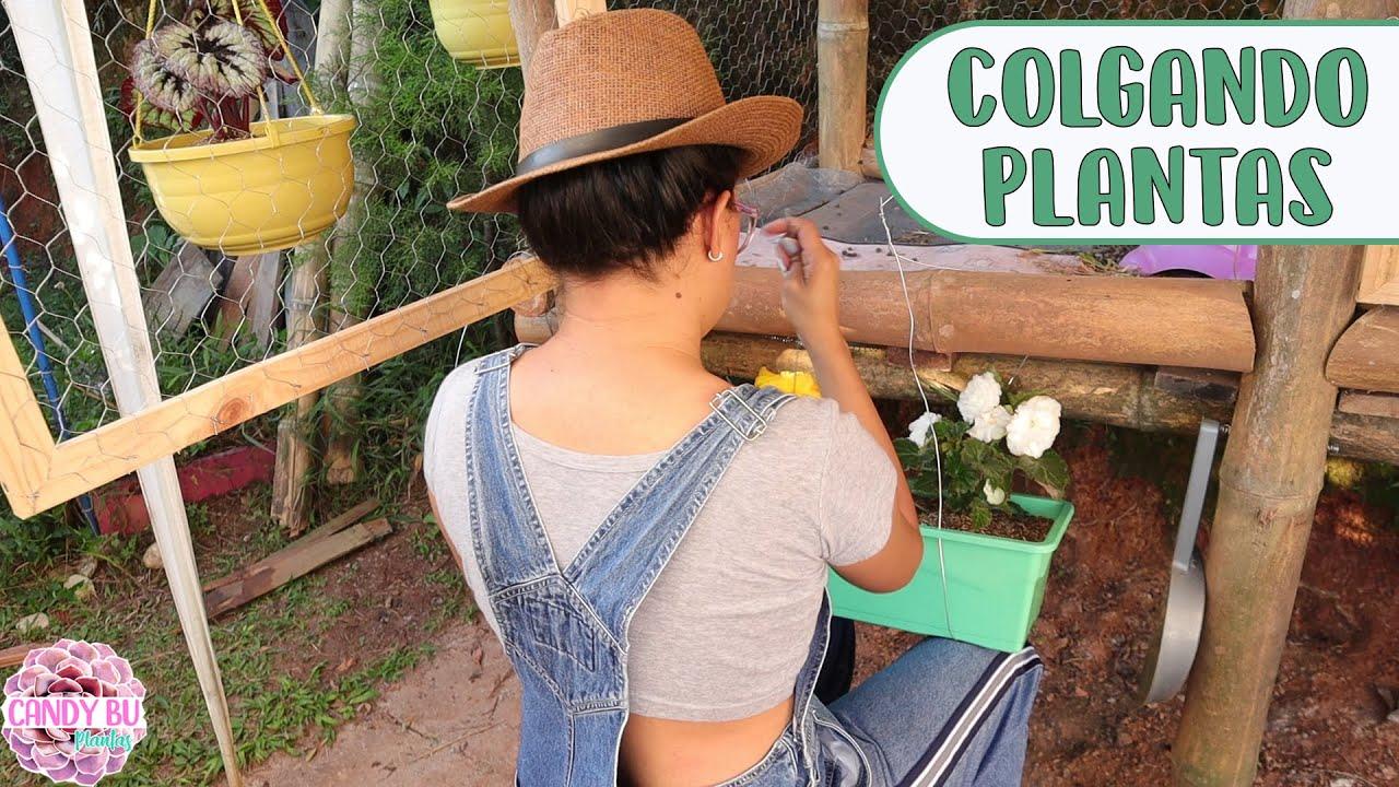 Colgando plantas en la casa del conejo, decorando, plantando y limpiando │Candy Bu