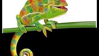 Chameleon Run: Soy Muy Lento