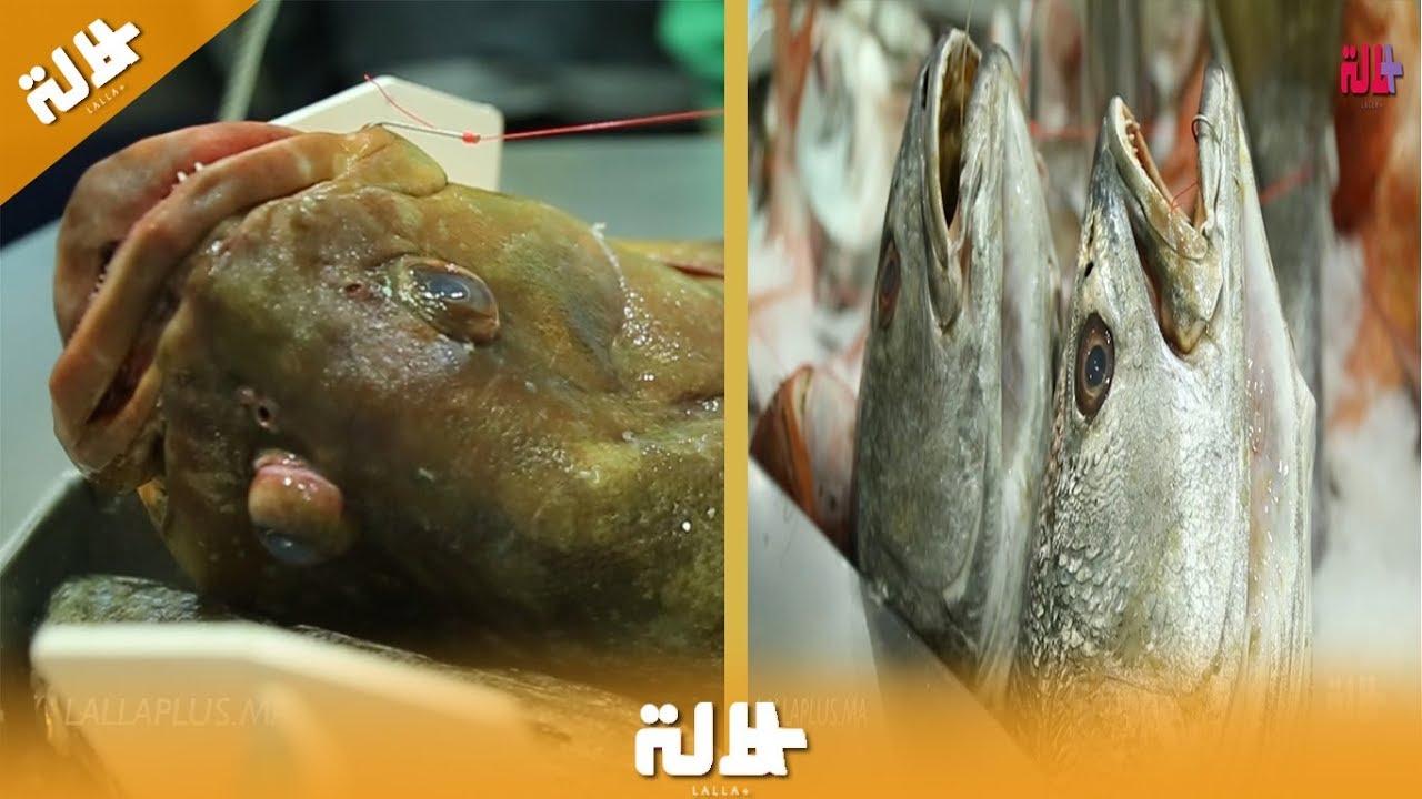 بمعرض الصيد البحري بأكادير.. أنواع من الأسماك باهظة الثمن تستخرج من شواطئ الجنوب
