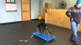 Aggressive Dog Rehabilitation | K9 Connection Dog Training