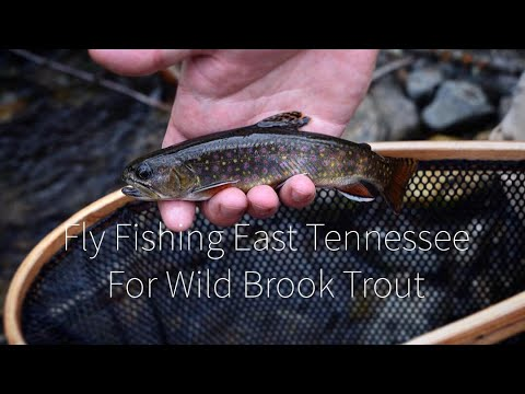 Fly Fishing East Tennessee For Wild Brook Trout