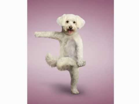 Yoga Poses For Your Pets Funny And Lovely