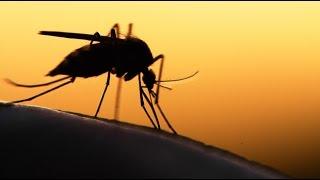 1.Как спастись от комаров за 2 минуты в домашних условиях.- Средство от комаров.