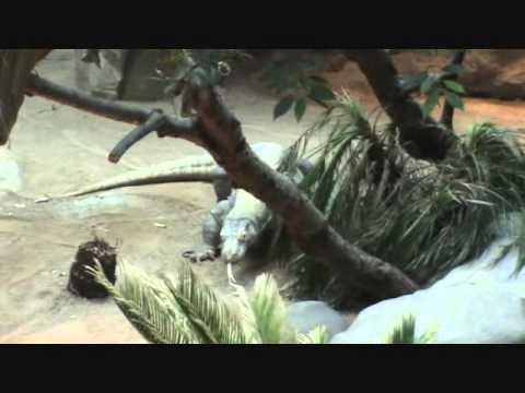 Part 1 - Minnesota Zoo in Apple Valley - Minneapolis, MN, USA - Interesting for Animal Lovers