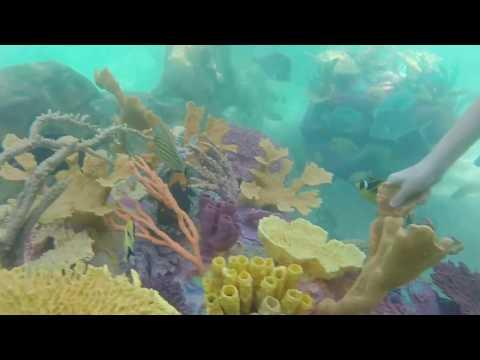 Discovery Cove Orlando Grand Reef November 2016
