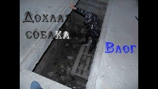 ►Влог. Заброшений двух-єтажний домик. Труп собаки в заброшке. ►Украина Николаев