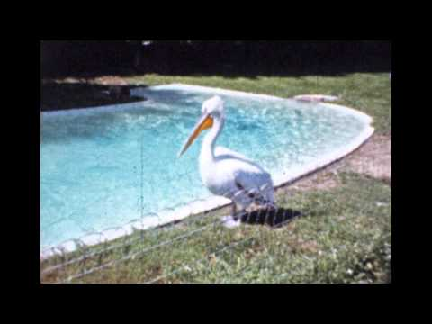 Cleveland Zoo Home Movies from 1960 1962 1964 Original films with sound HD