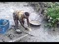 Fishing catching lot of catfish from mud water by hand Catch an Amazing cat fish