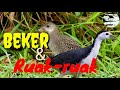 Suara Pikat Burung Beker Campur Ruak Ruak  Mp3 - Mp4 Download