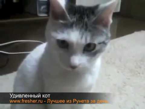 Удивленный кот видео