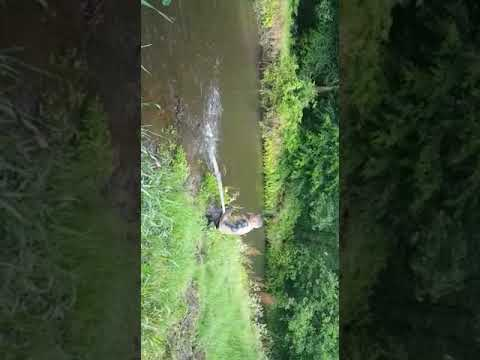 Salmon Fishing, River Lynher Cornwall