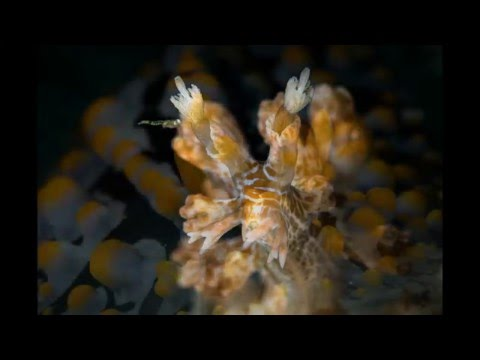 the beauty of underwater life: Romblon