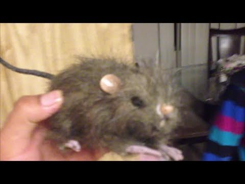 The Epic Rat Prank on Mother!!!!