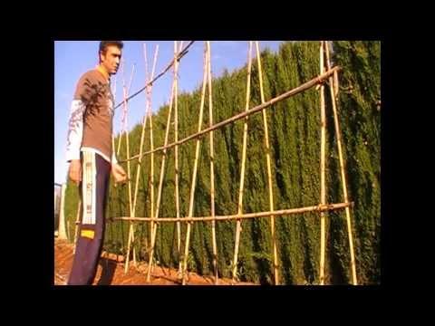 Como guiar los tomates entutorado colocar las ca as paso for Como poner plantas en la pared