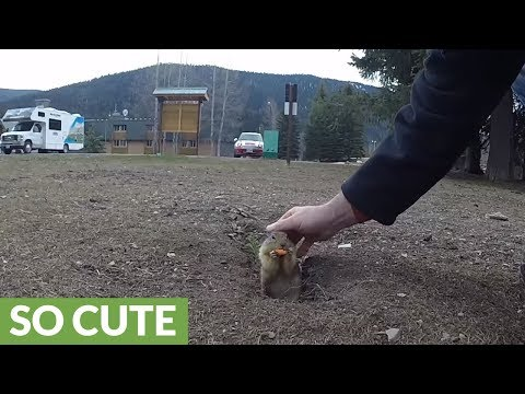 Incredibly friendly ground squirrels eat from human's hand