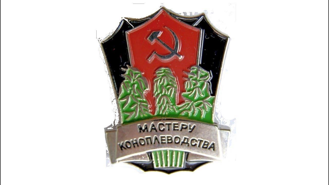 Теплица на миллион гривен: житель Черниговщины выращивал коноплю и галлюциногенные грибы - Цензор.НЕТ 1019