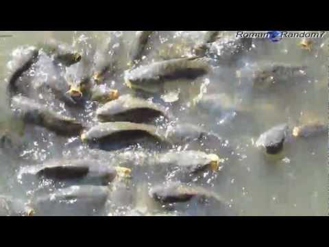 Hungry Fish, Голодная рыба!