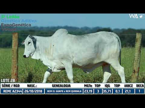 LOTE 28 - REMC A 2344 - 3º Leilão Genética Aditiva Expogenética 2020