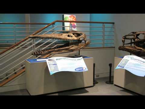 Megacephalosaurus eulerti   Triebold Paleontology