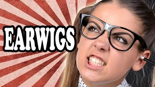 Do Earwigs Really Lay Eggs in Your Ears? — TodayIFoundOut