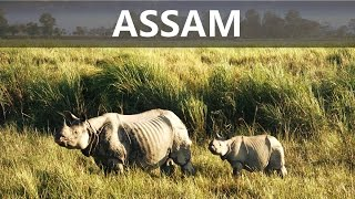 TOP 10 PLACES TO VISIT IN ASSAM