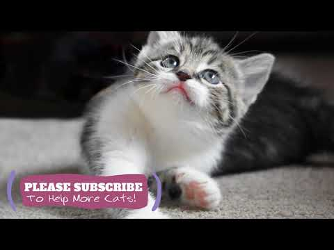 Relaxing Music for Cats  2 Hours for Relax Stressed Cats to Help You Clean Your Cat ☯LCZ91