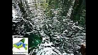 Anna Aqua Pets-Ornamental fish farm (Kerala) - White Cat Fish