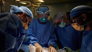 Ohne Abstoßung: Chirurgen transplantieren Niere von Schwein zu Mensch