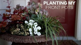 Planting My Front Pots