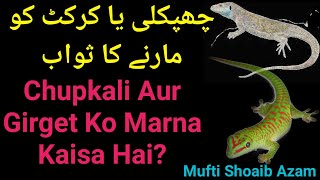 Killing Lizard And Geckos Chupkali Aur Girget Ko Marne Ka Sawab By Mufti Shoaib Azam