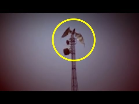 5 Dragons Caught On Camera & Spotted In Real Life!
