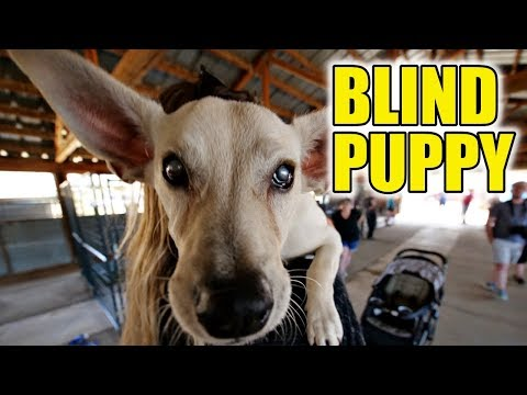 BLIND PUPPY learns what love f...