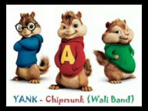 Yank - Chipmunk (Wali Band)