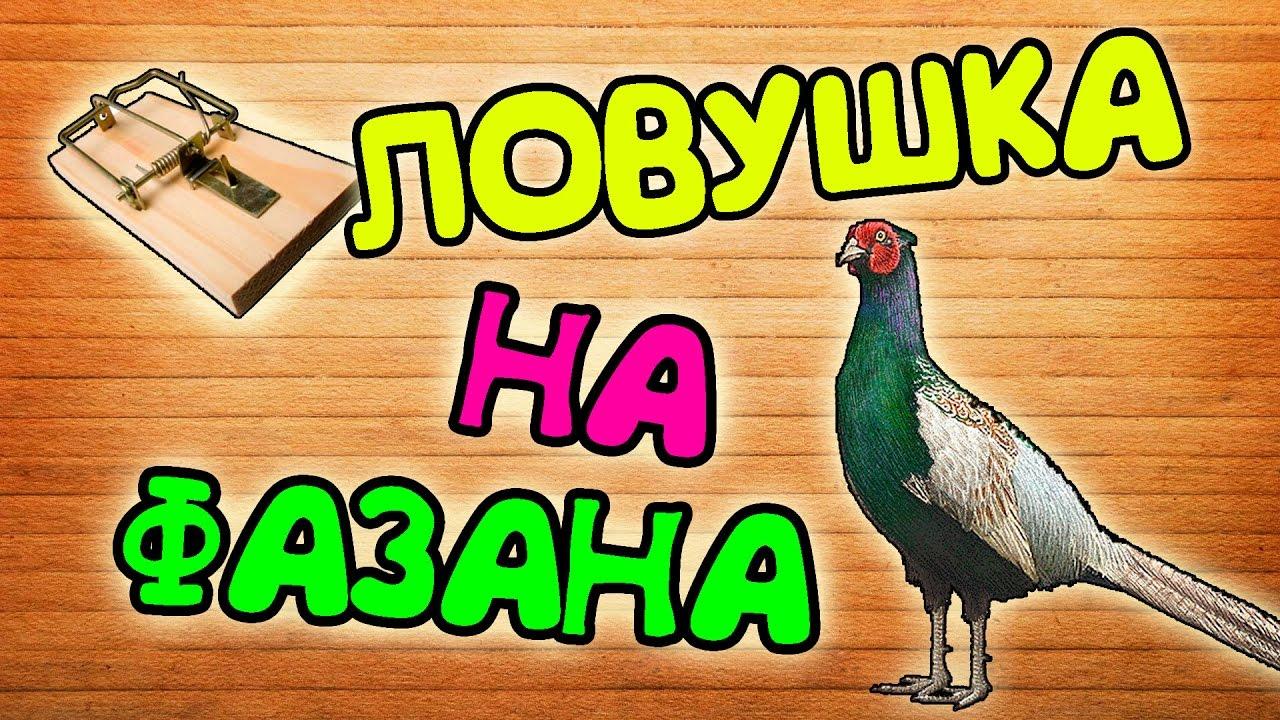 ЛОВУШКА НА ФАЗАНА ЗА 2 МИНУТЫ !!!