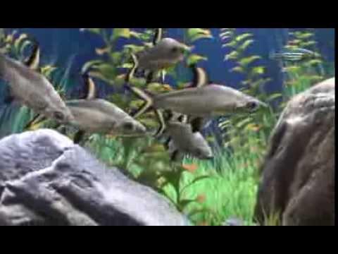 Dream aquarium fish packs 1 2 youtube - Dream aquarium virtual fishtank 1 ...