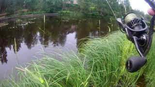 Рыбалка в июле на черной речке Охота за окунем на лайт небольшими вертушками