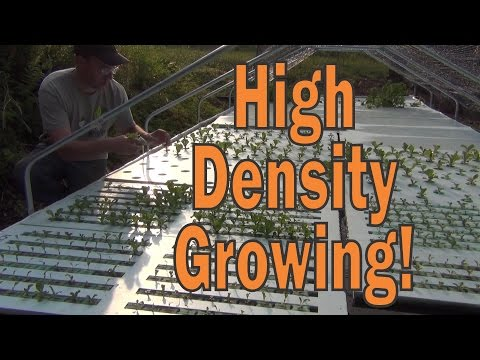 High Density Growing Experiment