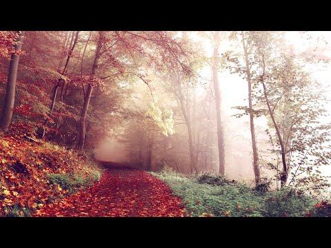 3 Hours of Beautiful Romantic Relaxing Harp Music | Instrumental Music ★6 Z82573816