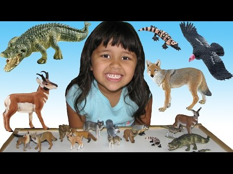 Learn North American Animals Names and Sounds Fun Educational video for Kids