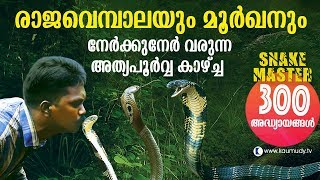 Wow! King Cobra and Cobra face off in the jungle | Snakemaster | Vava Suresh