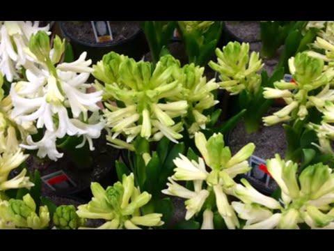 Portland Flower Market tour