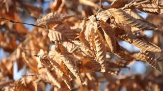 Uitgedroogde Bladeren-Remko de Landmeter-Fluit &Sebastian Radu Seu-Cimbalom