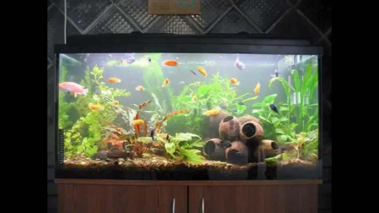 Aquarium decoration ideas youtube diy aquarium for How to decorate fish tank